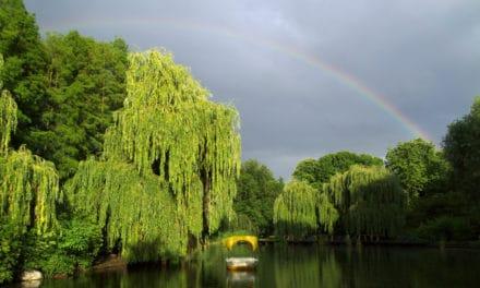 Der Luisenpark in Mannheim
